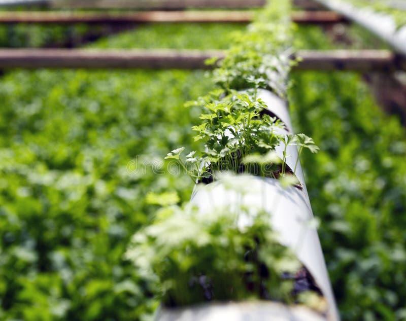 Het landbouwbedrijf van de hydrocultuuraanplanting stock afbeeldingen