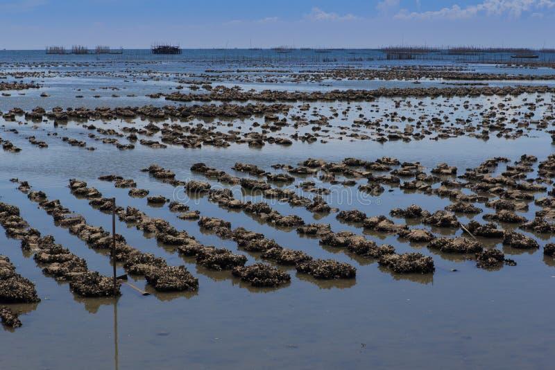 Het landbouwbedrijf van de oester stock fotografie
