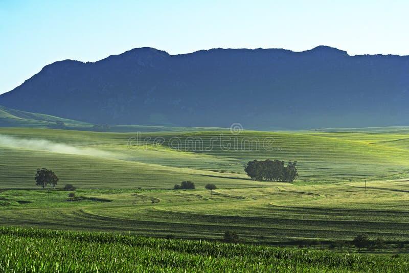 Het landbouwbedrijf van de tarwe stock foto's