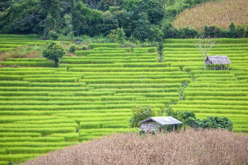 Het landbouwbedrijf van de terrasrijst stock fotografie