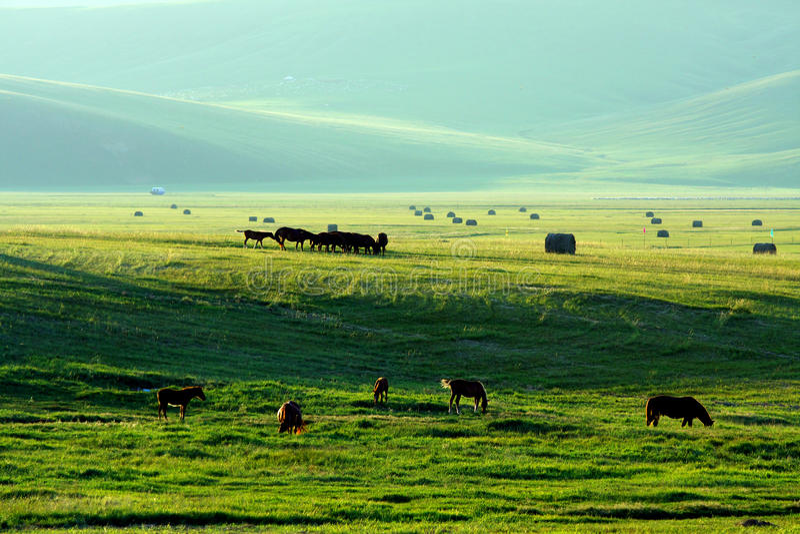 Het landbouwbedrijf van de voorraad royalty-vrije stock foto