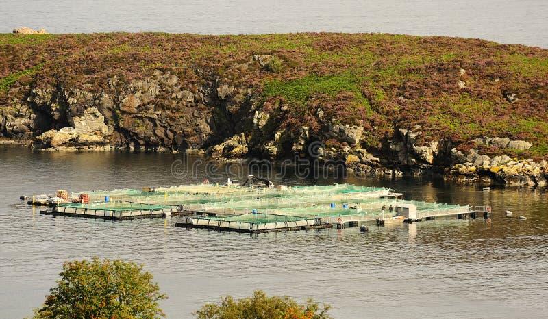 Het landbouwbedrijf van de zalm, Eddrachillis baai, Schotland royalty-vrije stock foto