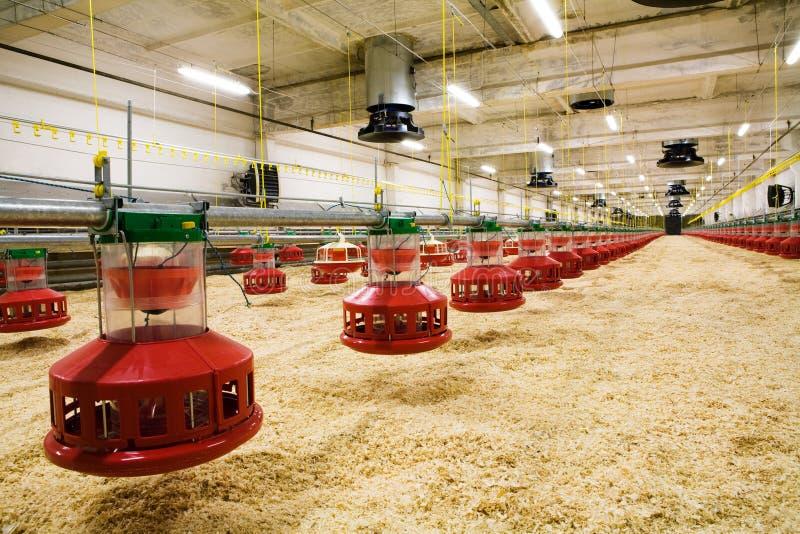 Het landbouwbedrijf van het gevogelte stock afbeelding