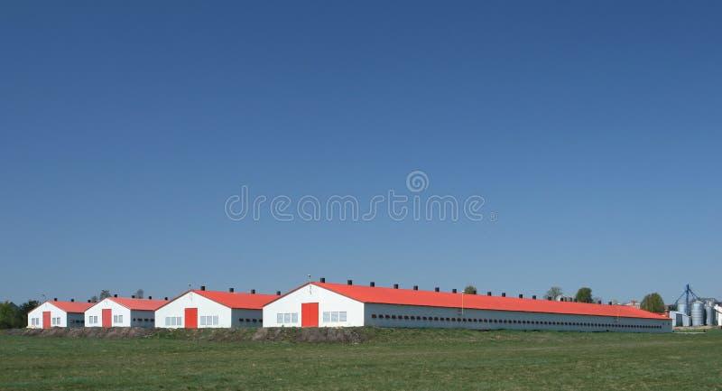 Het landbouwbedrijf van het gevogelte stock fotografie