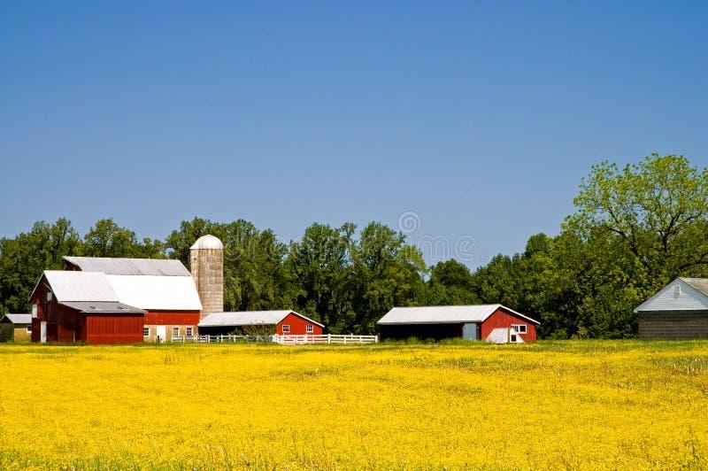 Het landbouwbedrijf van het land in de lente stock afbeeldingen