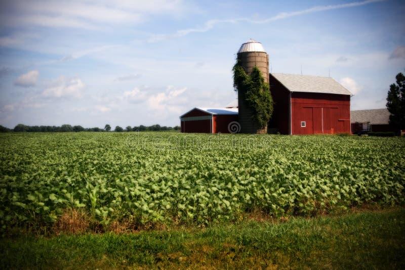 Het Landbouwbedrijf Van Illinois Stock Afbeelding