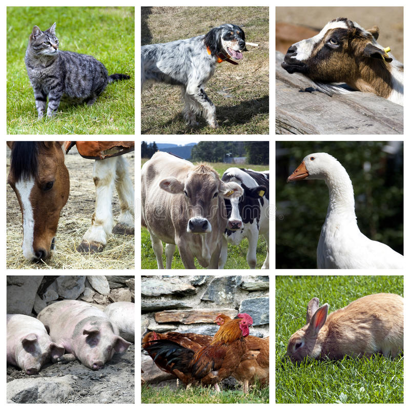 Het landbouwbedrijfcollage van dieren royalty-vrije stock fotografie