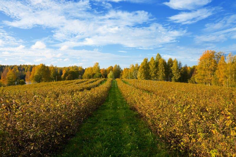 Het landbouwlandschap van de herfst royalty-vrije stock foto