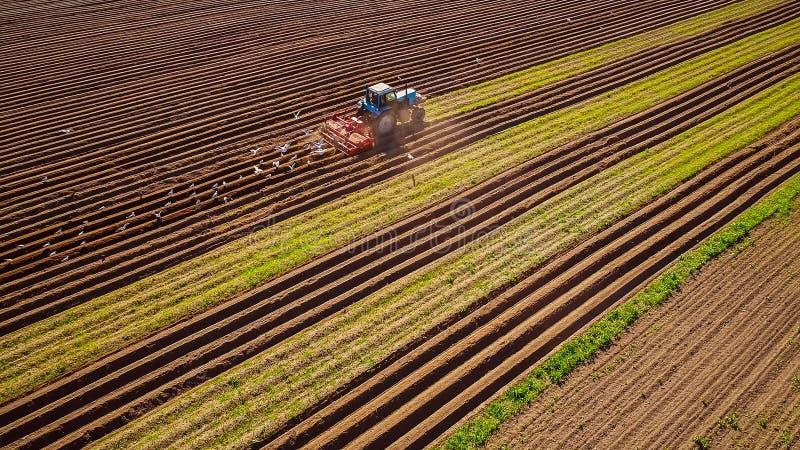 Het landbouwwerk aangaande een tractorlandbouwer zaait korrel Hongerige vogels a royalty-vrije stock fotografie