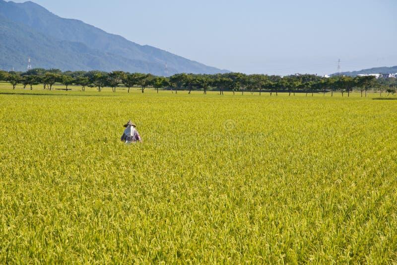 Het landelijke landschap van Taiwan royalty-vrije stock foto