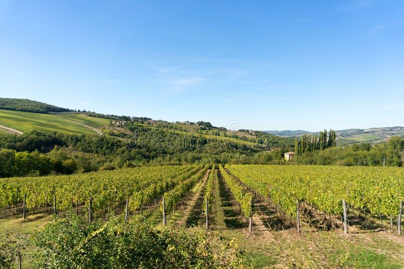 Het landelijke landschap van Toscanië van wijngaarden en groene heuvels royalty-vrije stock foto's