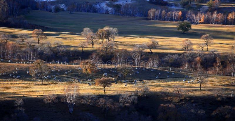 Het landschap Bashang van China stock afbeeldingen