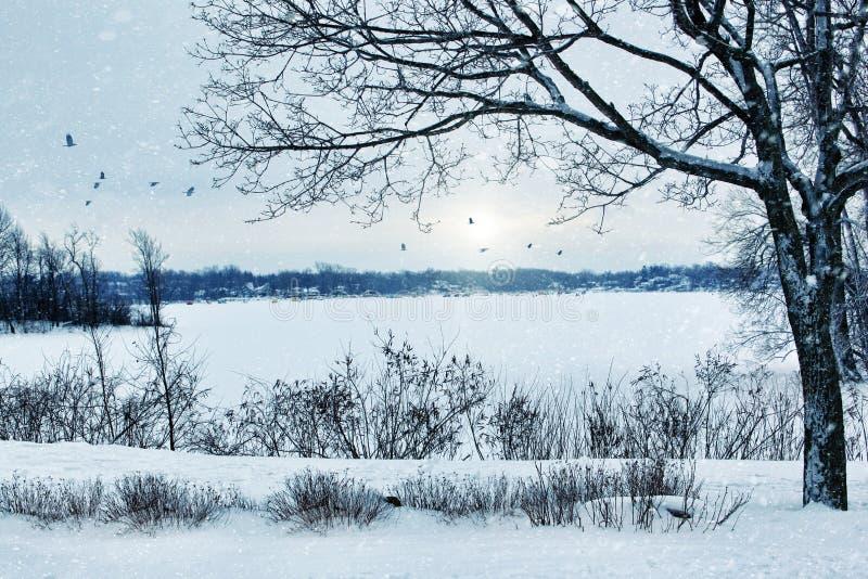 Het landschap dat van de winter een meer overziet royalty-vrije stock foto