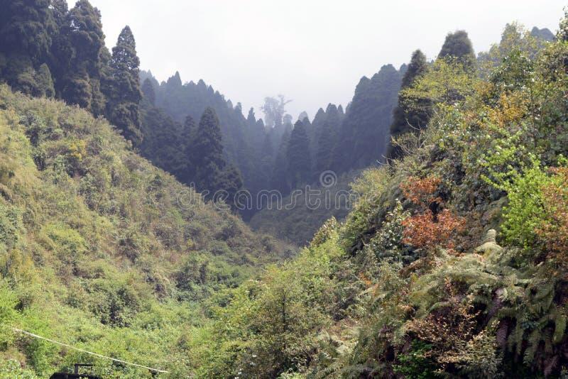 Het landschap in een rond Darjeeling, India is groen en mooi Het is het toneeldeel van Himalayagebergte waar theelandgoederen en  stock afbeeldingen