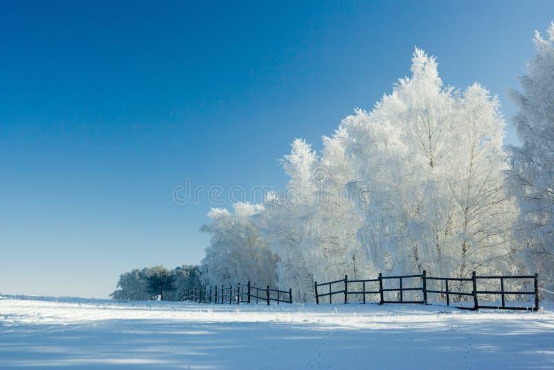 Het landschap en de bomen van de winter stock foto