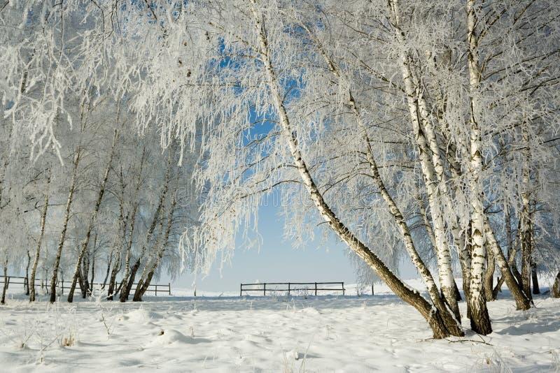 Het landschap en de bomen van de winter stock fotografie