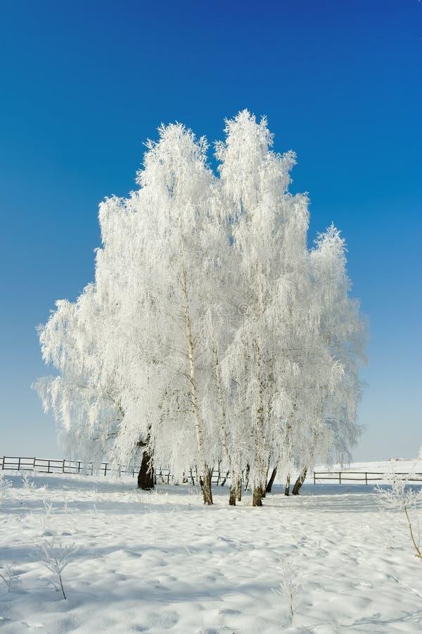 Het landschap en de bomen van de winter stock afbeeldingen