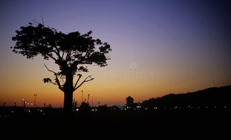Het landschap en de boom van de avond royalty-vrije stock fotografie