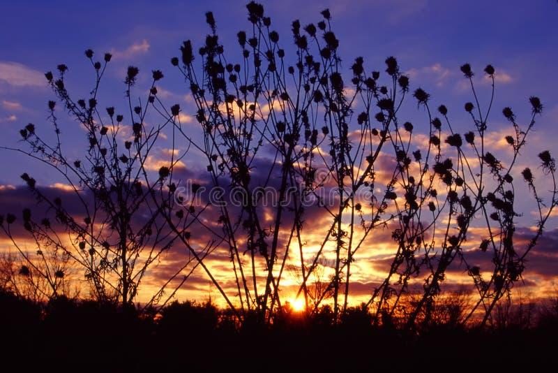 Het Landschap Illinois van de prairiezonsondergang stock afbeeldingen