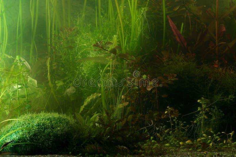 Het landschap van Aguarium royalty-vrije stock foto