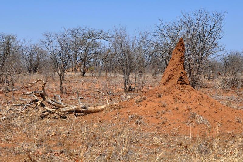 Het landschap van Arican met termitarium stock fotografie