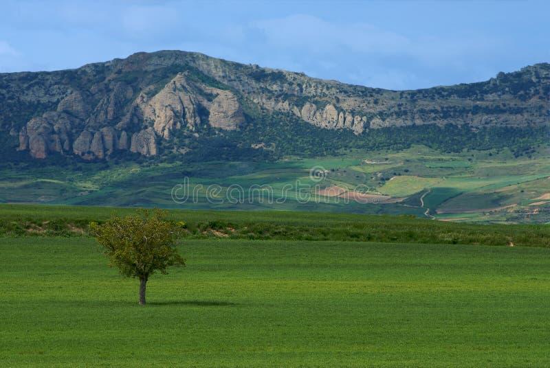 Het landschap van Burgos stock afbeelding