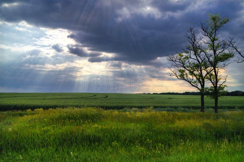 Het landschap van de aard stock foto