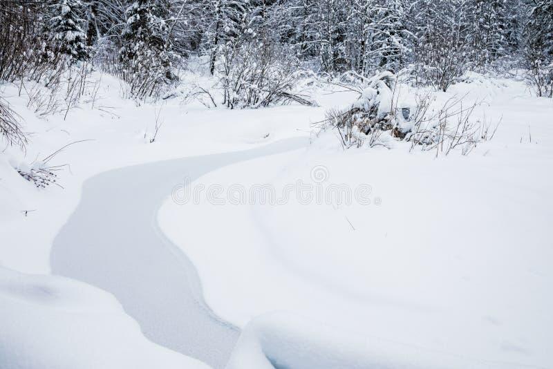 Het landschap van de beek in het mooie de winterbos of in het park onder de bomen onder de sneeuw, ijs royalty-vrije stock foto