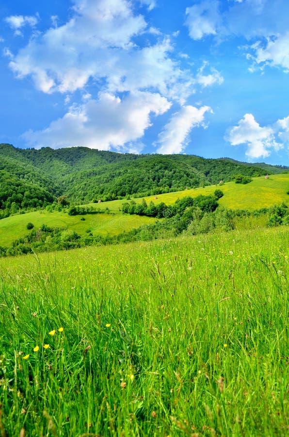 Het landschap van de berg in Roemenië stock afbeelding