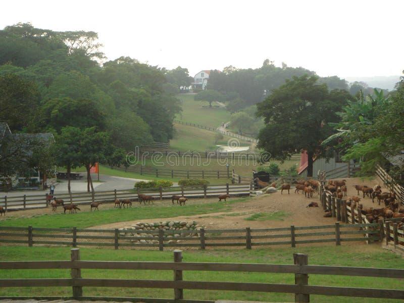 Het landschap van de boerderij stock afbeeldingen