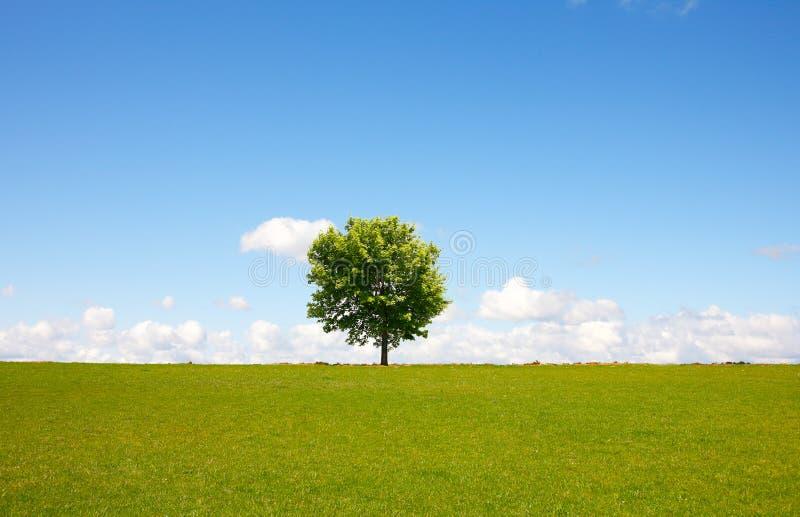 Het landschap van de boom royalty-vrije stock fotografie