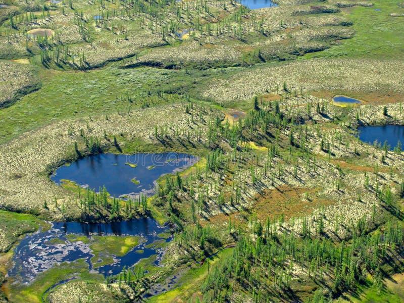 Het landschap van de bos-toendra royalty-vrije stock afbeeldingen