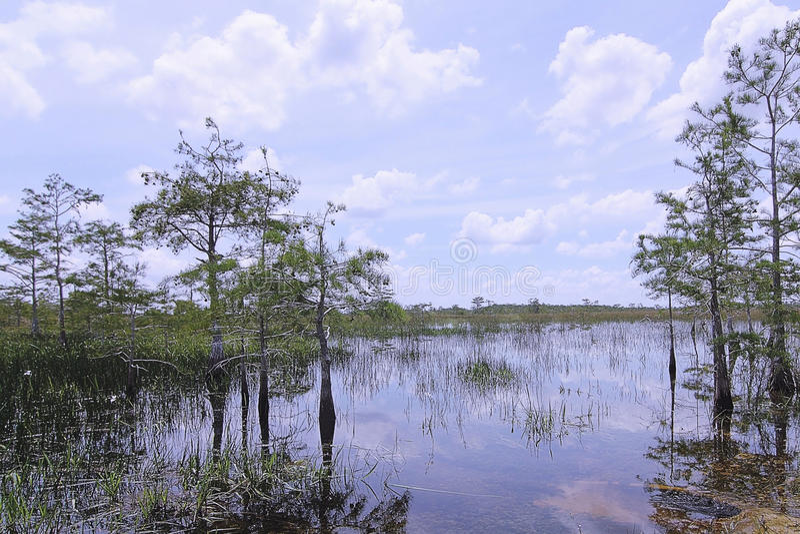 Het Landschap van de Cipres van Everglades royalty-vrije stock afbeelding