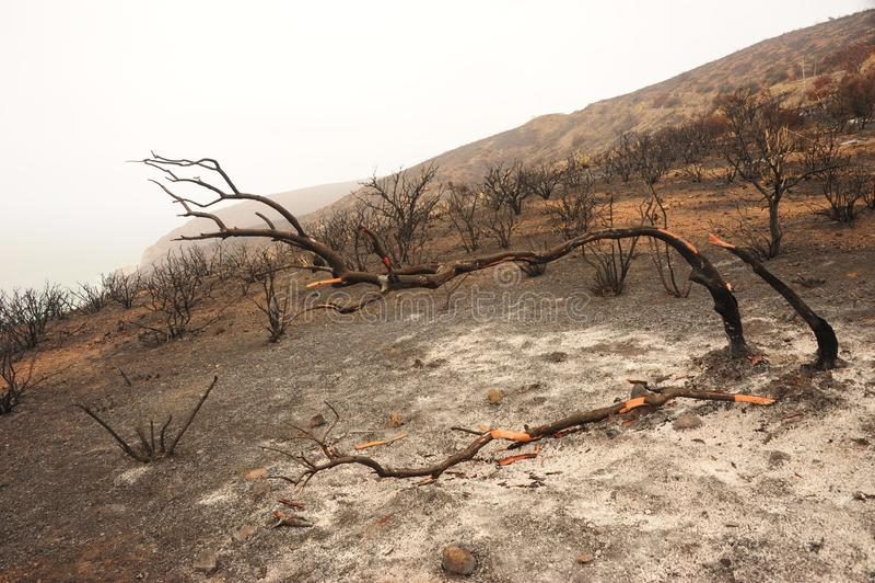 Het Landschap van de de lentesbrand royalty-vrije stock afbeelding