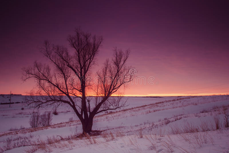 Het Landschap van de de winteraard Silhouet van boom bij zonsondergang stock afbeelding