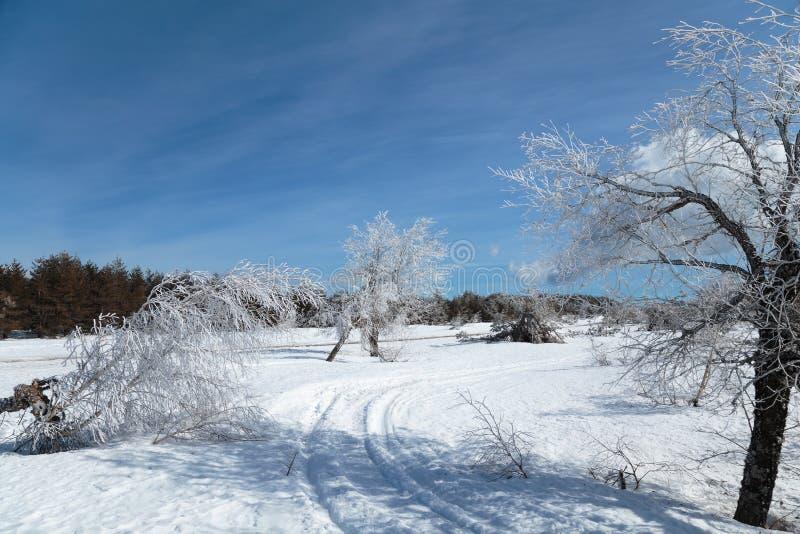 Het Landschap van de de winterberg met de Wolk van de de Boomhemel van de Sneeuwpijnboom royalty-vrije stock fotografie
