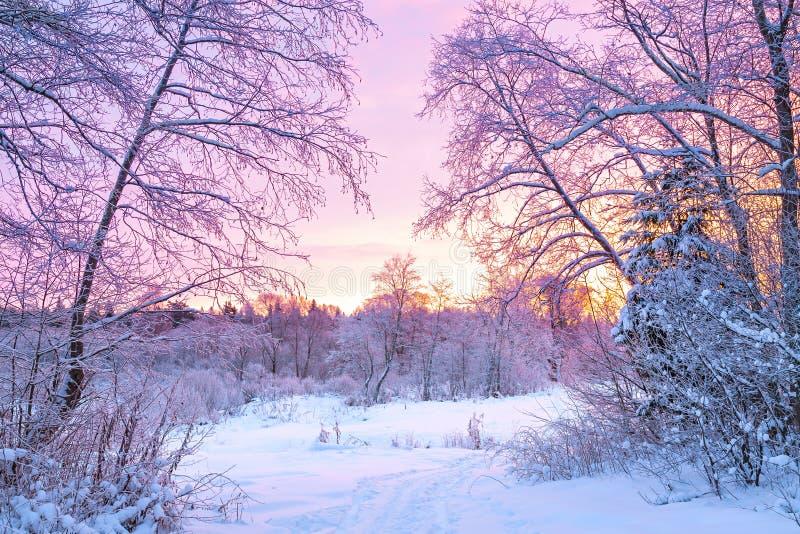 Het landschap van de de winternacht met zonsondergang in het bos stock afbeelding