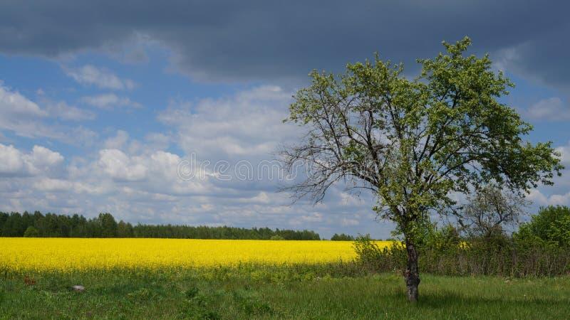Het landschap van de fotozomer royalty-vrije stock afbeeldingen