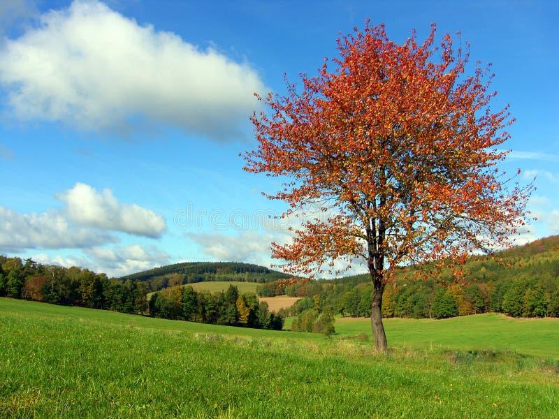 Het landschap van de herfst. royalty-vrije stock foto's