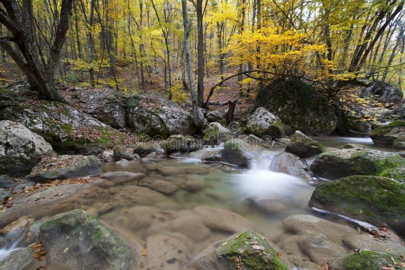 Het landschap van de herfst in het hout met kleine rivier stock foto
