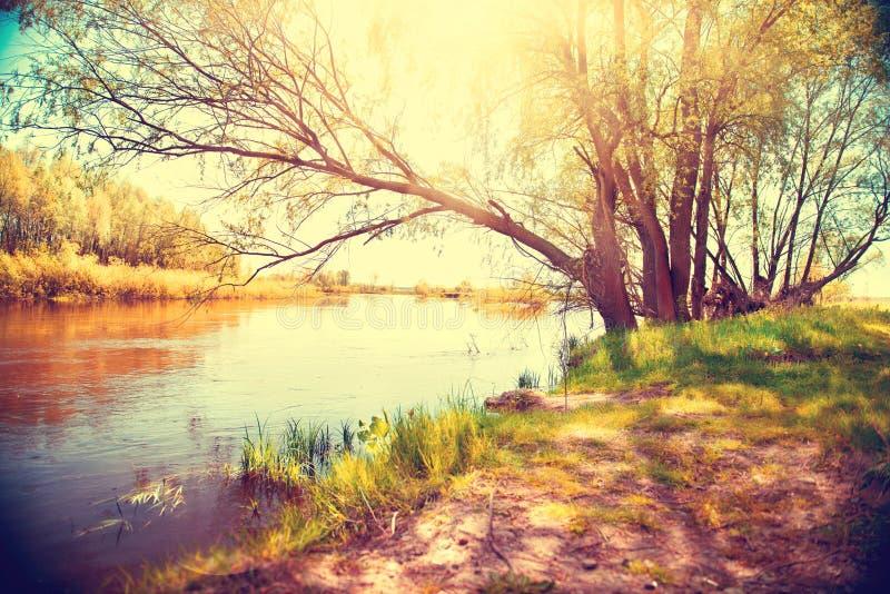 Het landschap van de herfst met een rivier stock foto