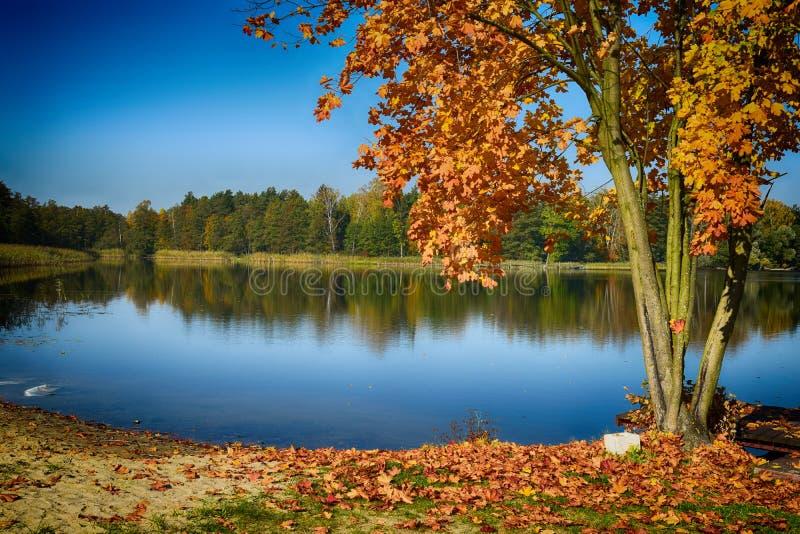Het landschap van de herfst met meer stock afbeelding
