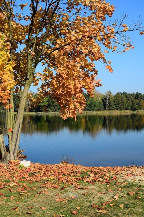 Het landschap van de herfst met meer stock foto's