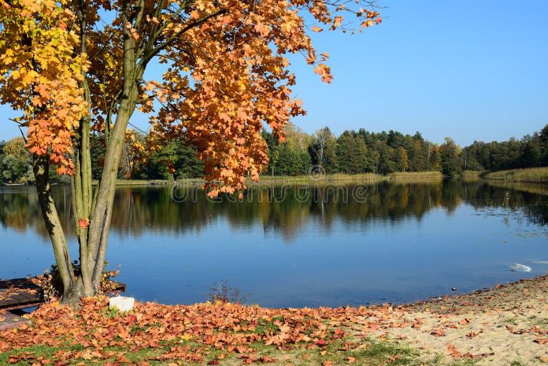 Het landschap van de herfst met meer royalty-vrije stock afbeeldingen