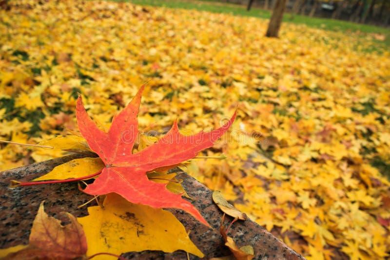 Het landschap van de herfst in Peking royalty-vrije stock foto's