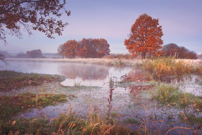 Het landschap van de de herfstaard Gekleurde bomen op rivierkust in de duidelijke ochtend Toneelaard in oktober stock foto