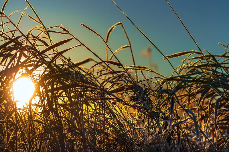 Het landschap van de de herfstochtend met vorst op het gras royalty-vrije stock afbeelding
