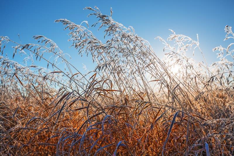 Het landschap van de de herfstochtend met vorst op het gras royalty-vrije stock fotografie