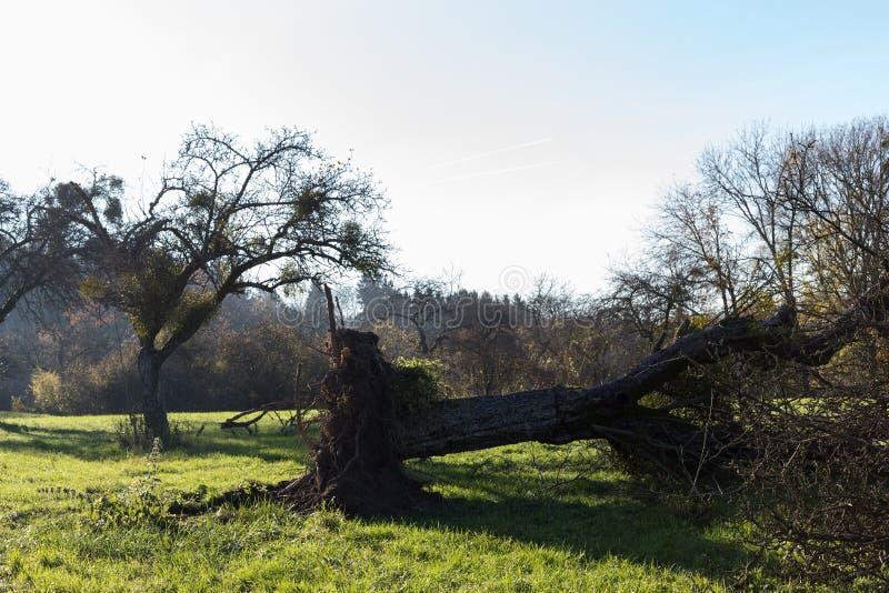het landschap van het de herfstplatteland met deadfallen bomen en blauwe hemel royalty-vrije stock afbeeldingen