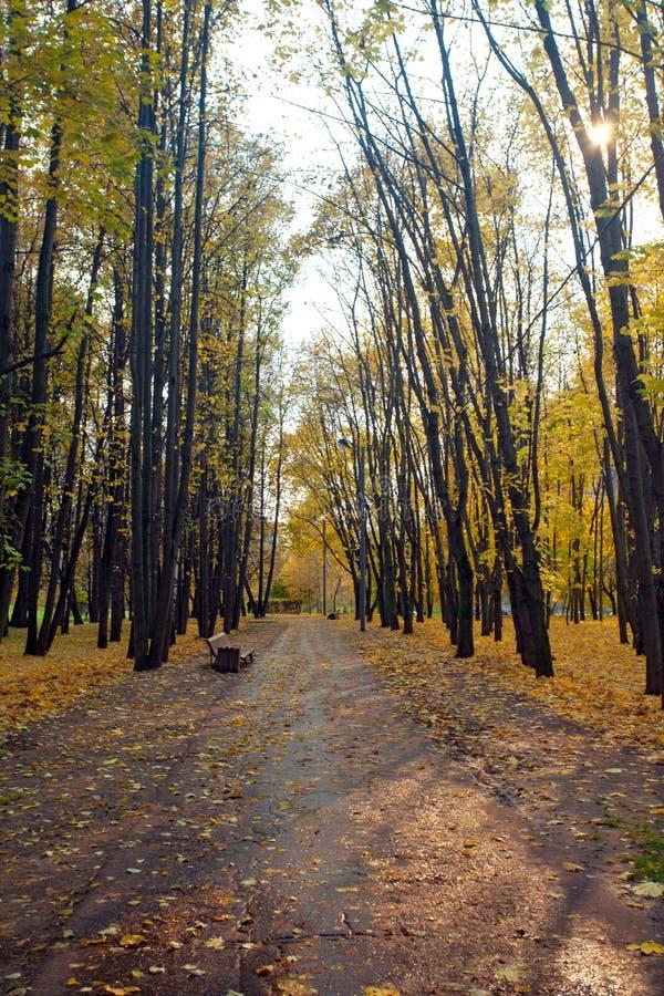 Het landschap van de de herfststad met voetganger een weg in park royalty-vrije stock afbeelding